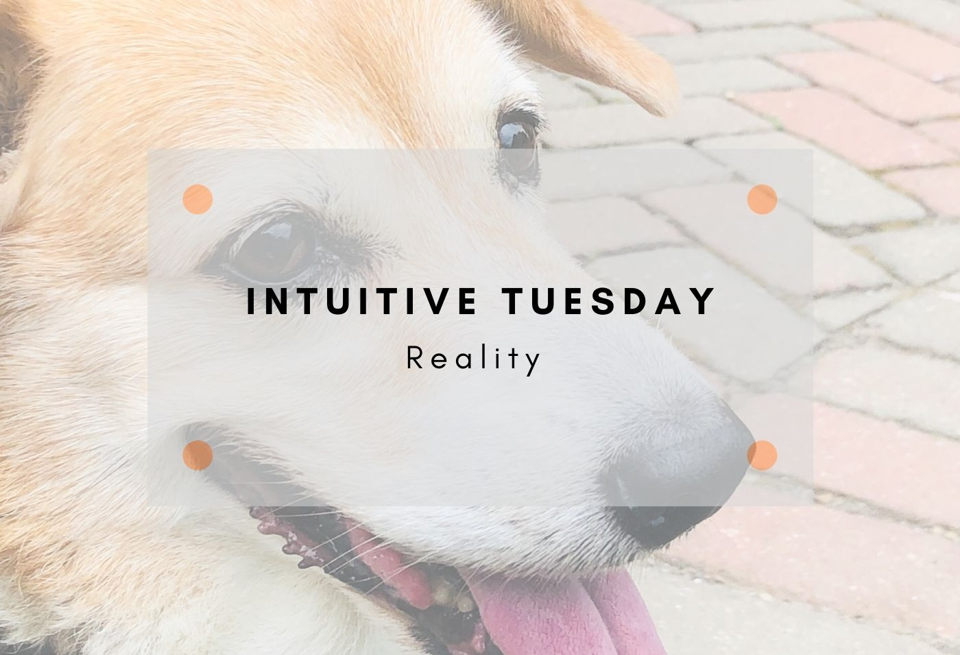 Intuitive tuesday reality